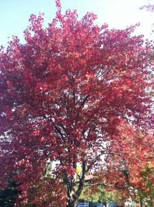 Autumn of Life
